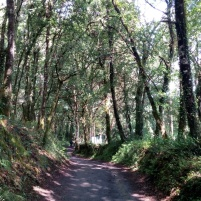 Camino de Santiago 20