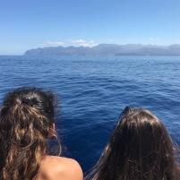 cetáceos19 (2)
