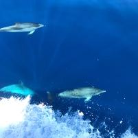 cetáceos19 (4)