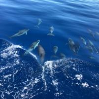 cetáceos19 (5)